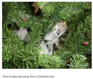 cat in holiday tree